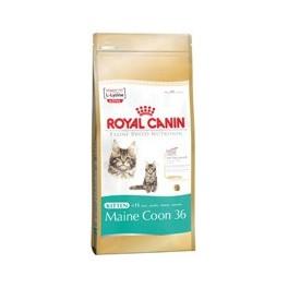 Royal Canine Feline Breed Nutrition Kitten Maine Coon 36 4 kg